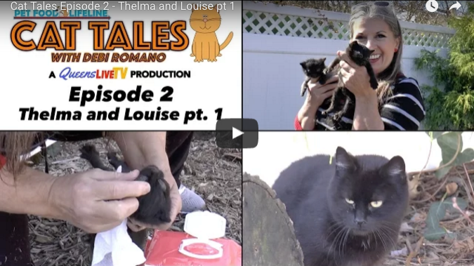 Cat Tales with Debi Romano Ep. 2 – Thelma & Louise pt. 1