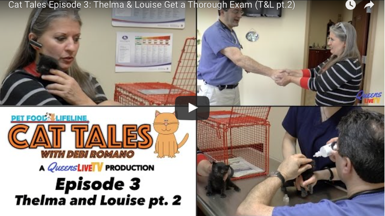 Cat Tales Episode 3: Thelma & Louise Get a Thorough Exam (T&L Part 2)
