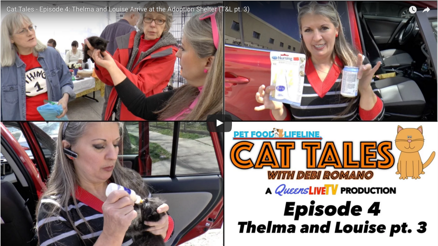 Cat Tales – Episode 4: Thelma and Louise Arrive at the Adoption Shelter (T&L pt. 3)